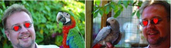 ll-parrotman