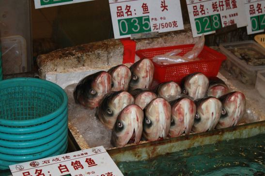 A chorus of fish heads from a restaurant in Guangdong.